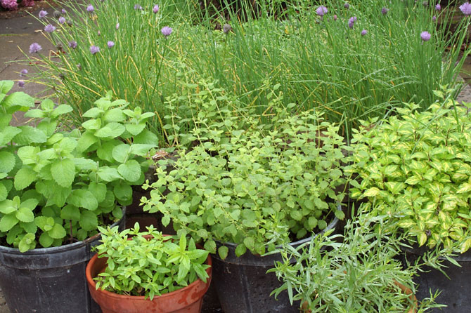 Perfect Herbs for natural healing